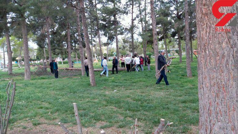 اتفاق تلخ برای درختان پارک پارس آباد + فیلم و عکس
