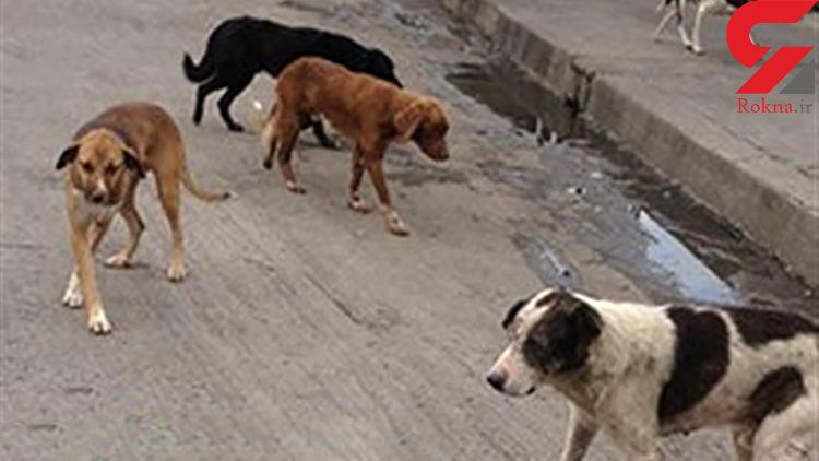 سگ ها یک مرد را در هشترود تیکه پاره کردند