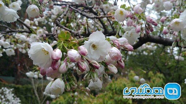 ساعت کار باغ گل های بوچارت در طول سال