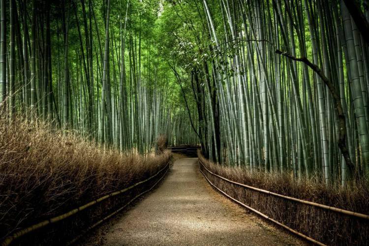 جنگل بامبوی Sagano