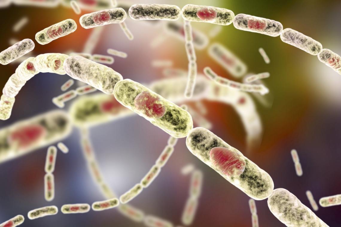 از طاعون تا وبا؛ با مرگبارترین سلاحهای بیولوژیک تاریخ آشنا شوید