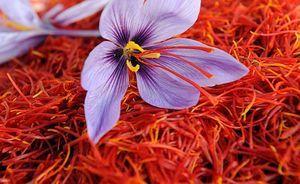 تقاضایی برای صادرات زعفران وجود ندارد