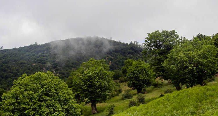 جنگل ابر شاهرود   جنگلی قدیمی و زیبا در دل سمنان