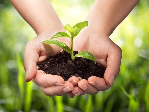مزایایی تفاله چایی، بهترین مکمل کود برای گیاهان
