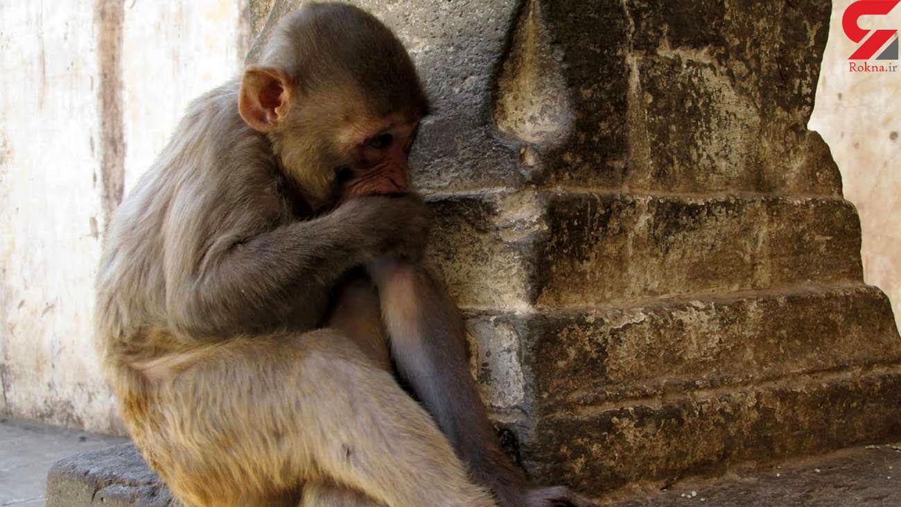 اقدام عجیب یک آرایشگر در قرنطینه سراسری کرونا + فیلم