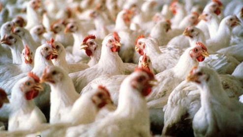 کاهش۳۰درصدی مصرف مرغ در بازار