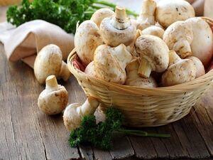 ایران در بین برترین تولیدکنندگان قارچ جهان / چگونه قارچ با کیفیت را تشخیص دهیم؟