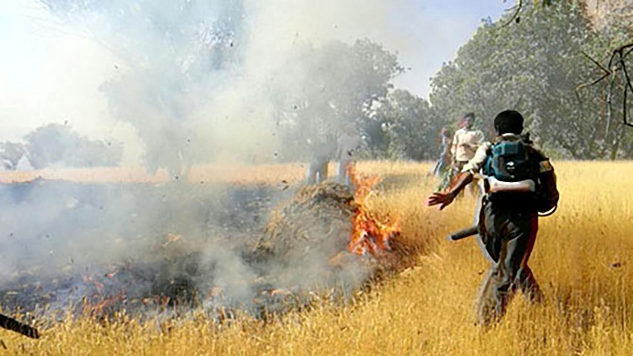 دستگیری عامل آتشسوزی منطقه ارژن شیراز