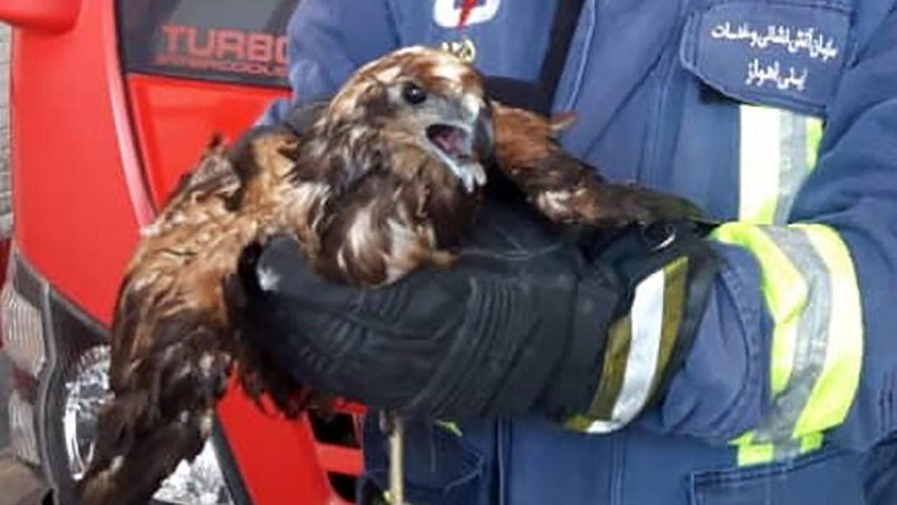 وحشت کودکان اهوازی از عقاب در مهدکودک + عکس