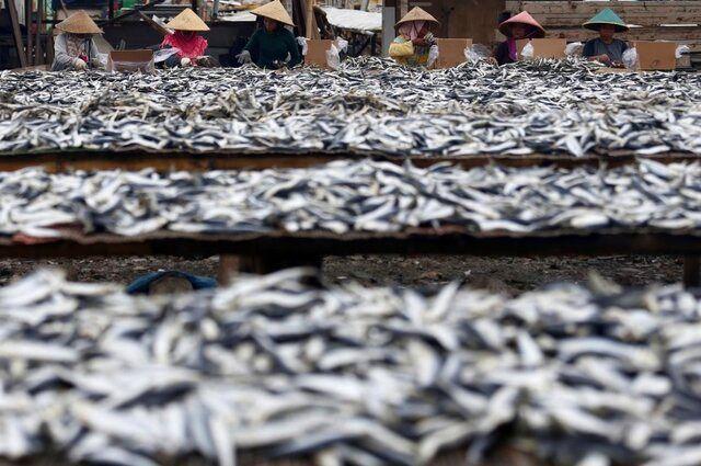 خرید حمایتی محصول تولیدکنندگان متضرر از کرونا