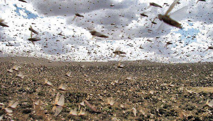 هشدار فائو در مورد بروز قحطی شدید در کنیا