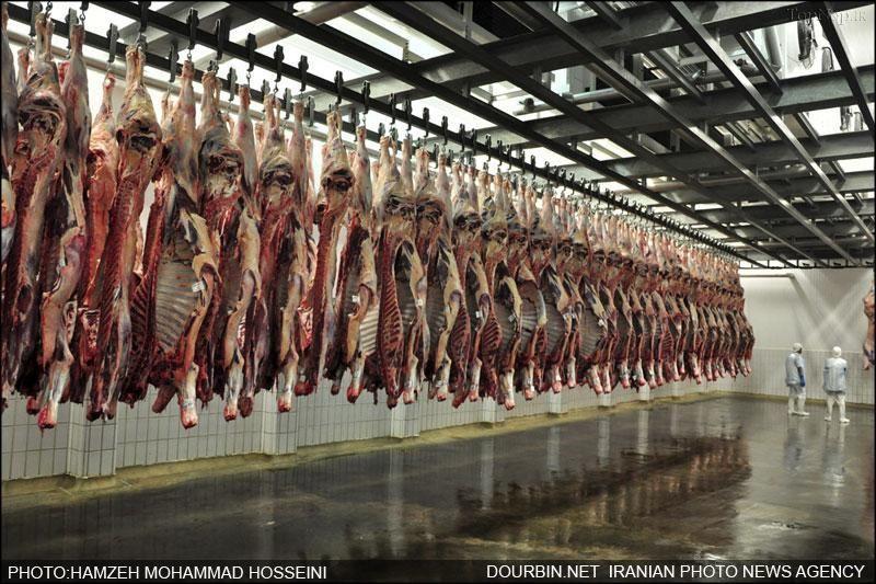 گرانی مرغ و گوشت ادامه دارد؟