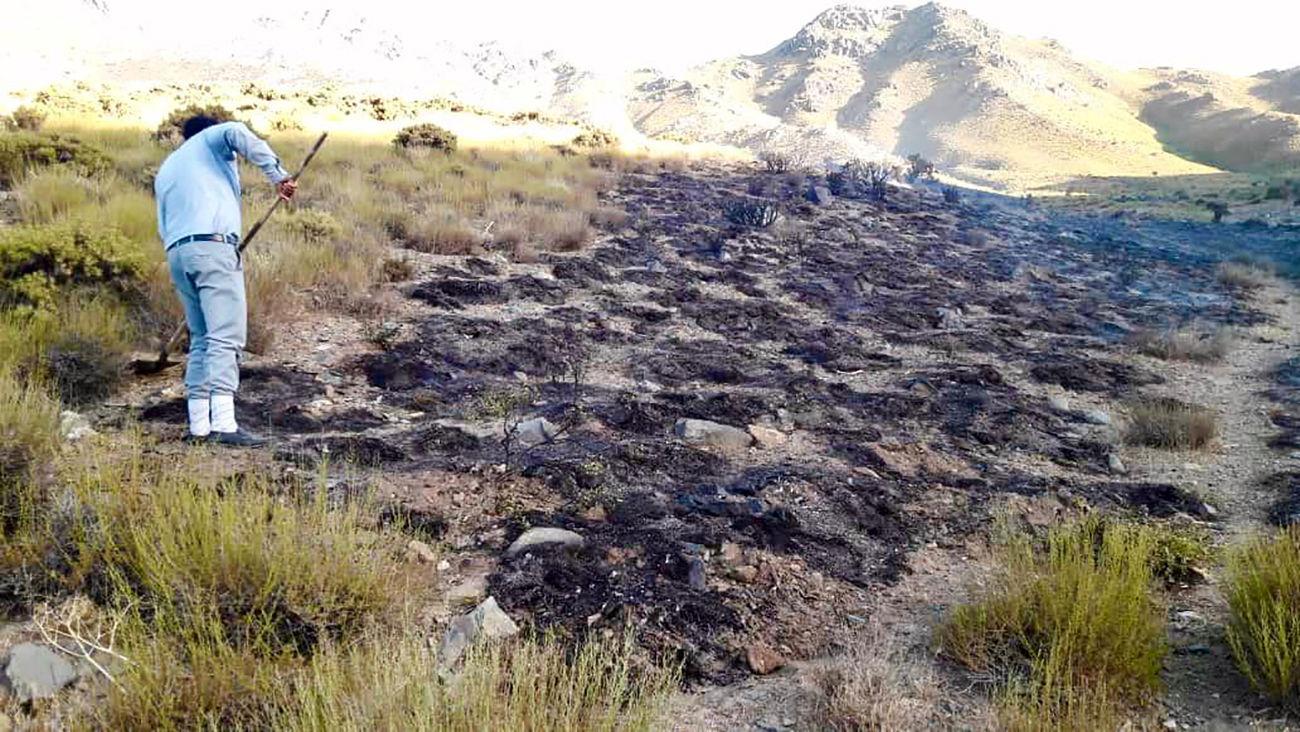 مهار آتش سوزی در مراتع سرچشمه رفسنجان