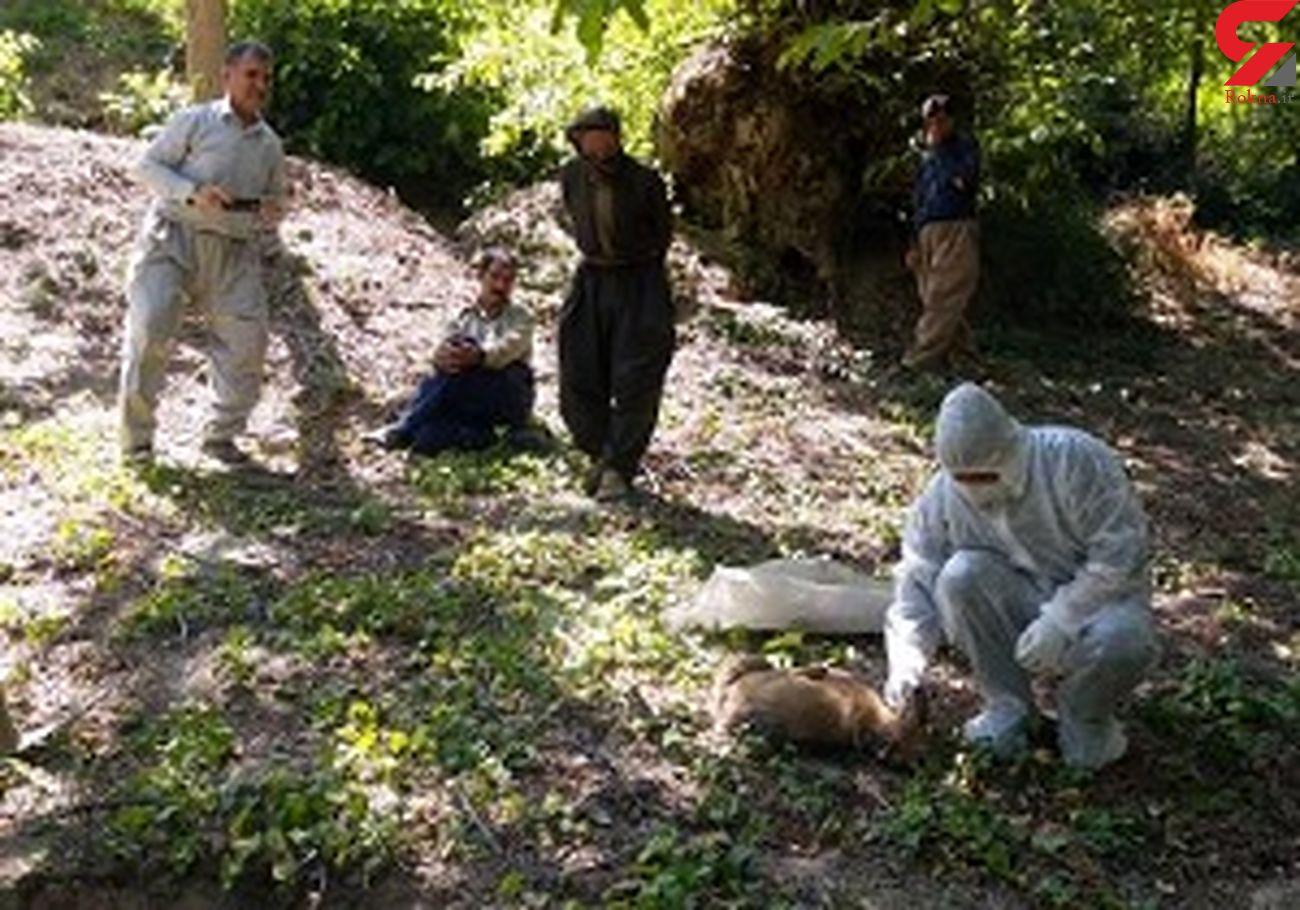 حمله گرگ به یک روستا در مریوان / ۳ روستایی به شدت زخمی شدند