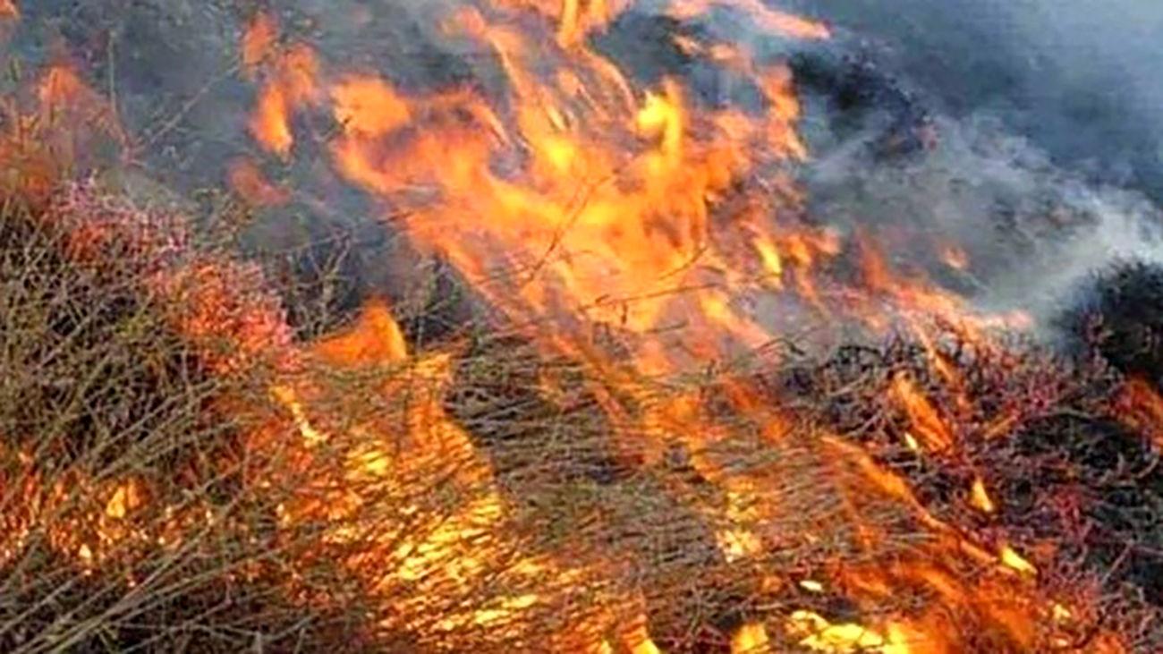 آتش سوزی جنگل های بلوط خوزستان زیر سر ۲ طایفه کینه جو بود