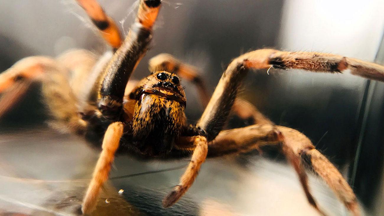 گیر افتادن مار در دام عنکبوت + فیلم