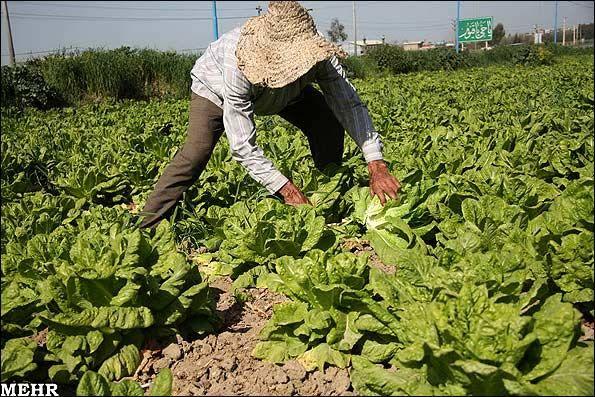 افزایش سرسام آور نهادههای کشاورزی