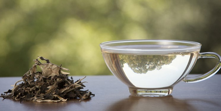 نوشیدن چای سبز در این ساعت ها خطر آفرین است