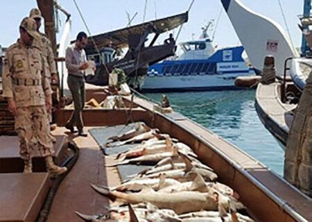 کشف یک تن ماهی قاچاق در چمن بید