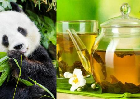 گرانترین چای جهان از مدفوع پاندا درست میشود