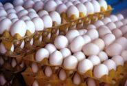 شانه تخم مرغ در آستانه ۴۰ هزار تومانی شدن