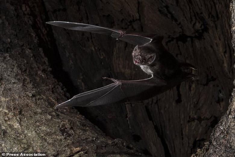 خفاش ها فاصله اجتماعی را رعایت می کنند