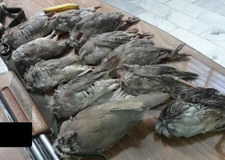 کشف گوشت شکار حیوانات حرام گوشت در سیاهکل