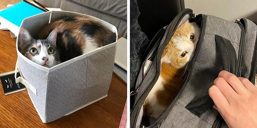 چرا گربهها عاشق جاهای تنگ و کوچک اند؟