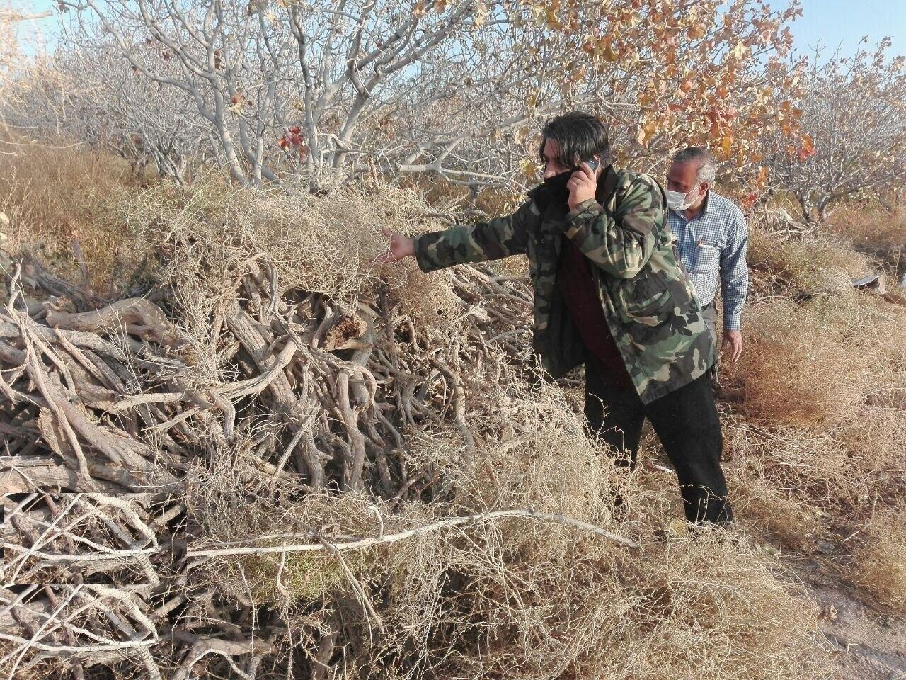 ۸ تن چوب تاغ در شاهرود کشف شد