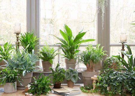 چند گیاه آپارتمانی که زود رشد میکنند