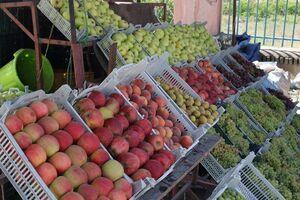 رسیدن میوه های نوبر پاییزی به بازار / میوه های پاییز