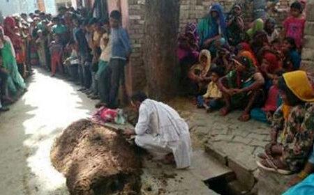 مردی زنش زیر خروارها مدفوع گاو زنده به گور + عکس