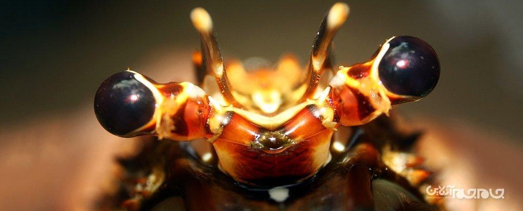 ایده ساخت زره پوشیدنی انعطافپذیر با الهام از بدن خرچنگها+عکس