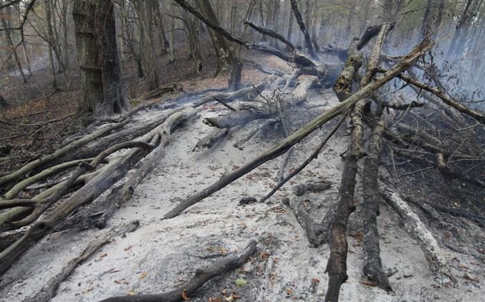 باران؛ نجات دهنده جنگلهای توسکستان پس از ۸ روز سوختن
