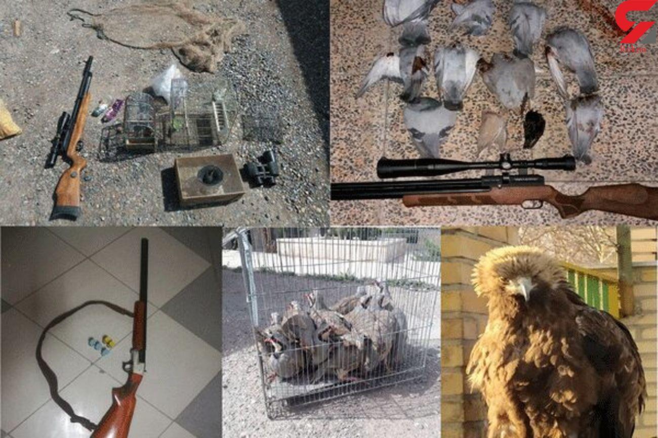 لاشه 17قطعه پرنده وحشی از یک شکارچی در نکا کشف شد