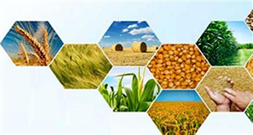 رشد ۱۱ درصدی صادرات محصولات کشاورزی و صنایع تبدیلی