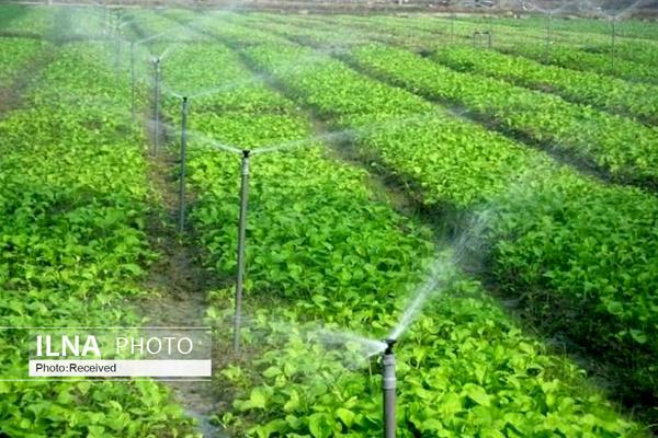 پرداخت تسهیلات «کشاورز کارت» به تولیدکنندگان محصولات استراتژیک