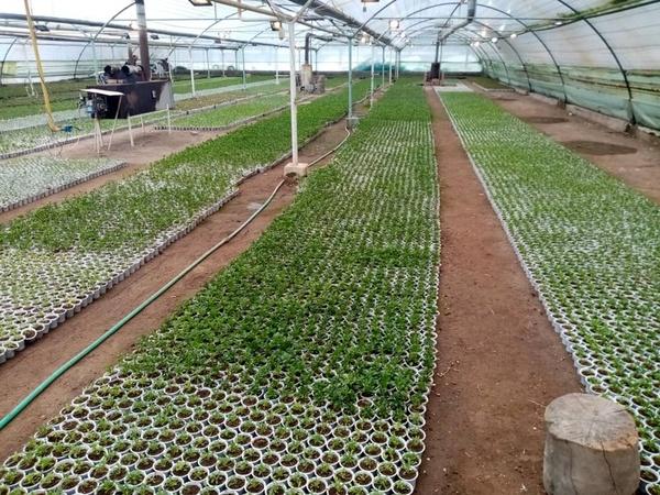 پرداخت ۱۲۰۰ میلیارد تومان تسهیلات برای ساخت گلخانه