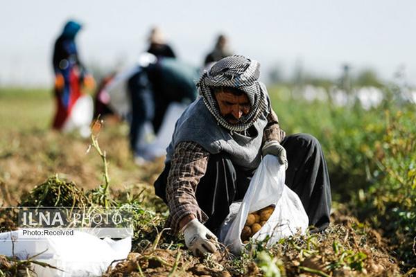 """کشاورزان طالب """"کشاورز کارت"""" نشدند/ با کشاورز کارت هزینه تولید ۲ برابر درآمد میشود"""