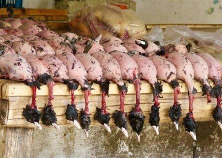 همکاری شورای تأمین برای جلوگیری از شکار پرندگان مهاجر مطلوب نیست-