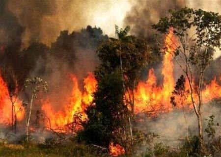 """نبود امکانات اطفای حریق و ناهماهنگی بیندستگاهی باعث گسترش آتشسوزی جنگل """"توسکستان""""/ دعا برای بارش باران!"""
