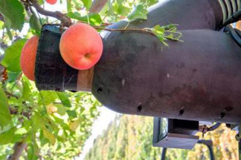 ببینید |  شیوهای خیرهکننده در چیدن میوه با استفاده از هوش مصنوعی