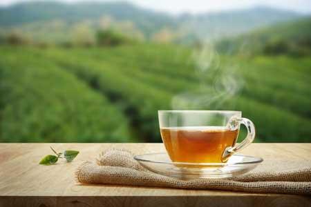 بهبود تمرکز سالمندان با نوشیدن چای