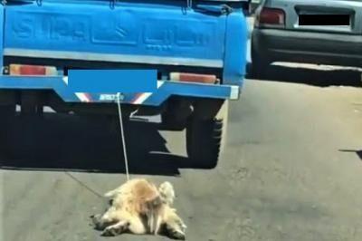 دستگیری حیوان آزار و عامل ترویج خشونت در اینستاگرام