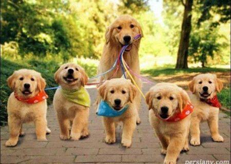 درمان ترس از سگ با روش های جالب