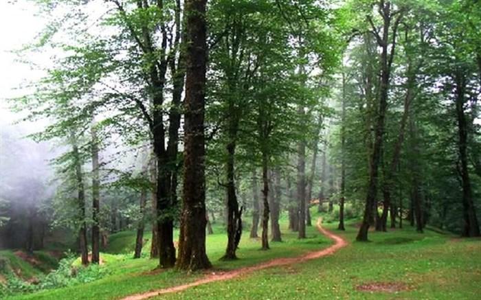 جنگلهای شمال ایران سالانه ۳/۶ میلیارد مترمکعب آب ذخیره می کنند
