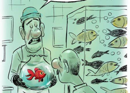 ببینید: ماهی بدون حباب رسید!