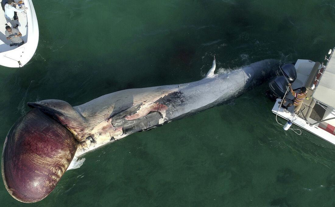 خودکشی عجیب نهنگ ها در خلیج فارس