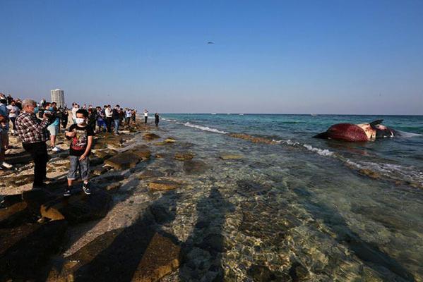 پیدا شدن دومین لاشه نهنگ در ساحل کیش