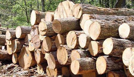 کشف ۲۵ تن چوب بدون مجوز حمل در شهرستان فاریاب